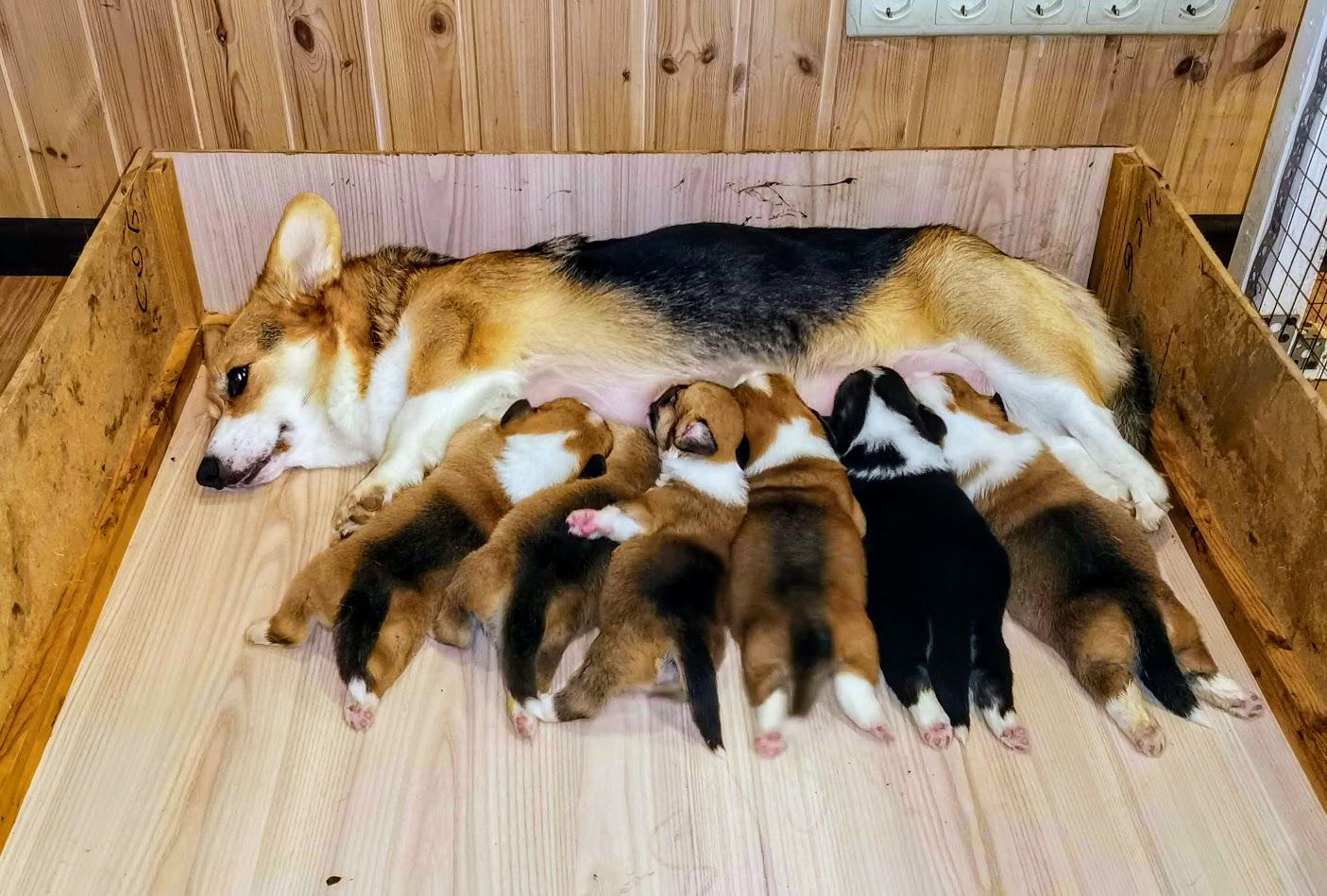 Mom and children.