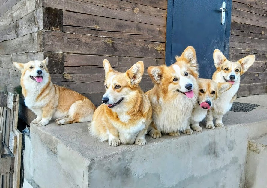 Corgis are waiting for you)